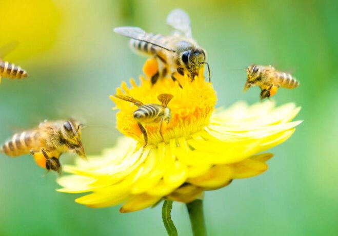 Honey Products Blog